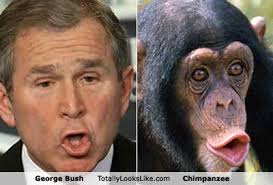 This image has an empty alt attribute; its file name is BUSH-43-CHIMP-3.jpeg